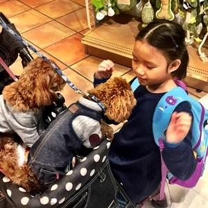 Liora suka banget elus-elus, hug dan gendong puppy dan bunny.